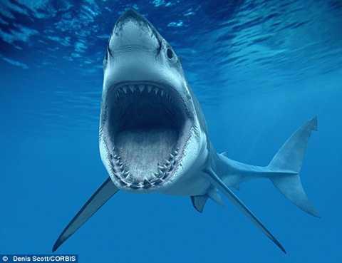 Theo một số nhân chứng, Adam đã bị một con cá mập trắng tấn công