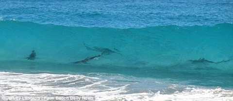 Hãi hùng trước hình ảnh cá mập tụ tập tại vùng biển Florida