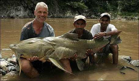Cần thủ câu cá chiên khổng lồ ở Ấn Độ. Ảnh internet