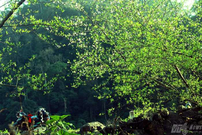 Những rừng đào nở muộn hai bên đường là nơi níu chân dân phượt mỗi khi qua đây (Ảnh: Phạm Thịnh)