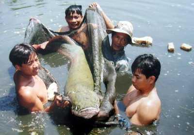 Một con cá hải tượng người dân bắt được ở TP.HCM (Ảnh VNN)