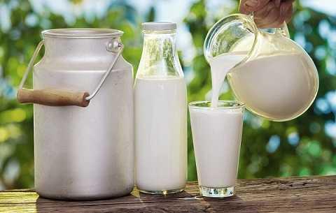 Sữa tươi chưa tiệt trùng sẽ bị nhiễm campylobacter, một loại vi khuẩn gây tiêu chảy, nhiễm khuẩn huyết