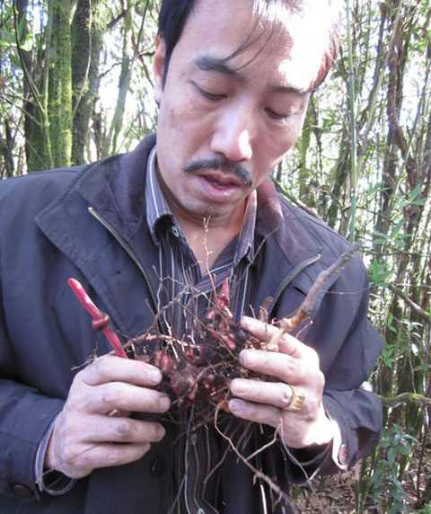 Lương y Phạm Văn Thanh trong một lần tìm thấy thảo dược chữa dạ dày