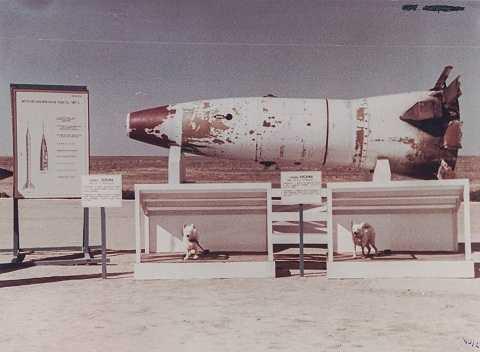 Tên lửa R2 mang theo 2 chú chó vào vũ trụ