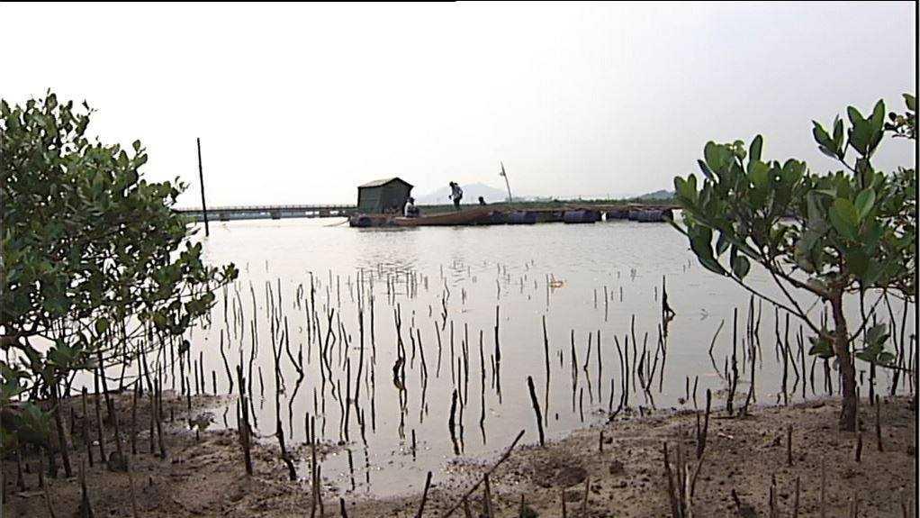 Nơi mua cá thử nghiệm tại xã Kỳ Hà (Hà Tĩnh)