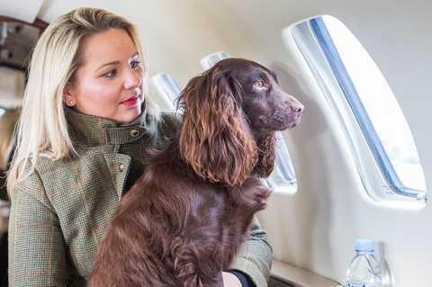 Các con vật đáng yêu và chủ của mình có thể dễ dàng đi du lịch mọi nơi.
