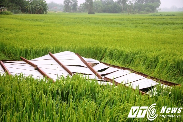 Nhiều mái nhà lợp bằng tôn bị lốc xoáy cuốn ra ruộng lúa. Khoảng 150 ha lúa bị ngã đổ. Đặc biệt, trận lốc xoáy kèm theo mưa đá này cũng khiến 3 người dân bị thương nhẹ.