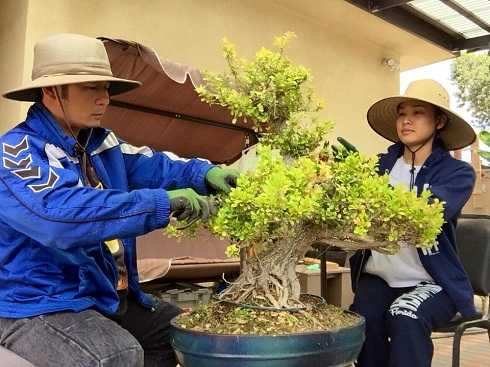 Vườn bonsai của Bằng Kiều rộng vài trăm mét vuông, có giá trị hàng tỷ đồng.