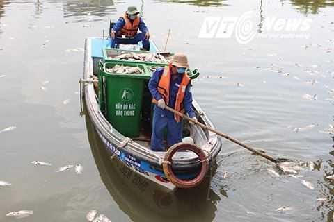 Công nhân vệ sinh môi trường đang trục vớt cá chết