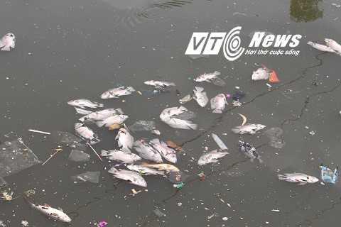 Cá chết nổi trên mặt kênh