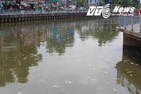 Cá chết trắng xóa bên bờ kênh