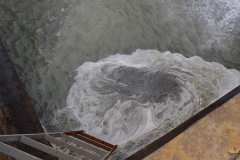Lãnh đạo công ty mía đường Hòa Bình thừa nhận xả thải không phép gây ô nhiễm sông Bưởi