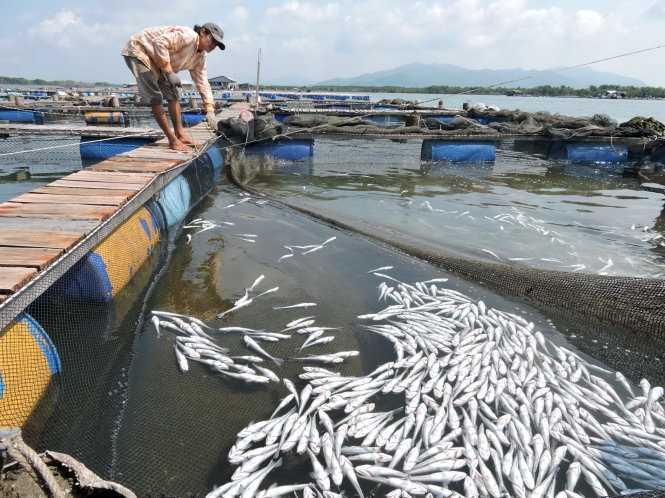 Nguồn nước sông Chà Và bị ô nhiễm nặng khiến cá bè của nông dân chết hàng loạt vào tháng 9/2015 - Ảnh: Đông Hà