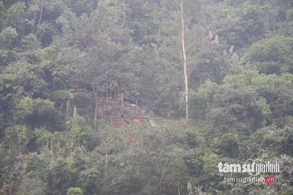 Cánh rừng già nơi ông Bình sống