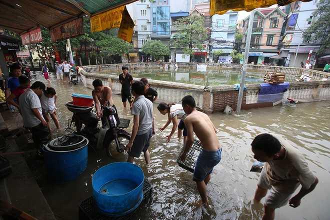 Từ 6h sáng, dân làng và nhiều sinh viên thuê trọ khu vực Mễ Trì đổ ra đường bắt cá. Nguồn ảnh: Vnexpress