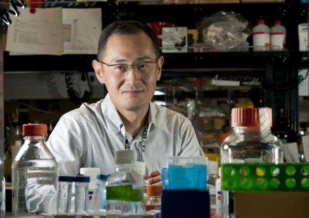 Giáo sư Shinya Yamanaka, một trong hai tác giả đoạt giải Nobel Y học năm 2012