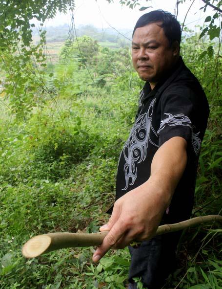 Ông lang Út lấy thuốc trong rừng