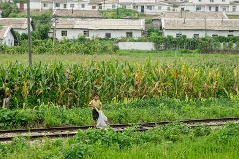 Cuộc sống thường ngày của những người dân vùng quê thường dựa nhiều vào trồng trọt. Trong ảnh là một cậu bé đang thu hoạch bắp ngô