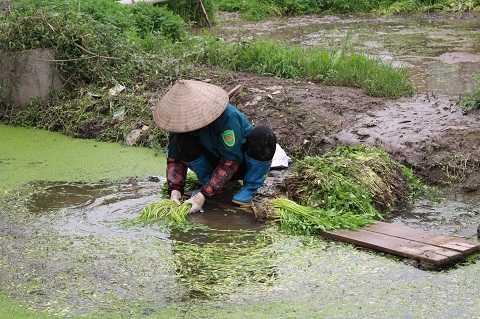 Hàng chục hộ dân xã Vĩnh Quỳnh trồng rau trong khu nghĩa địa - Ảnh Ngọc Thắng