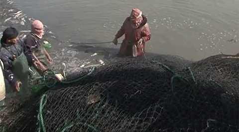 Chiến binh IS bán cá và buôn xe  để trang trải thêm cuộc sống