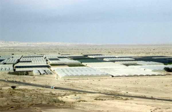 Một nông trại tại sa mạc Avara, Isarel