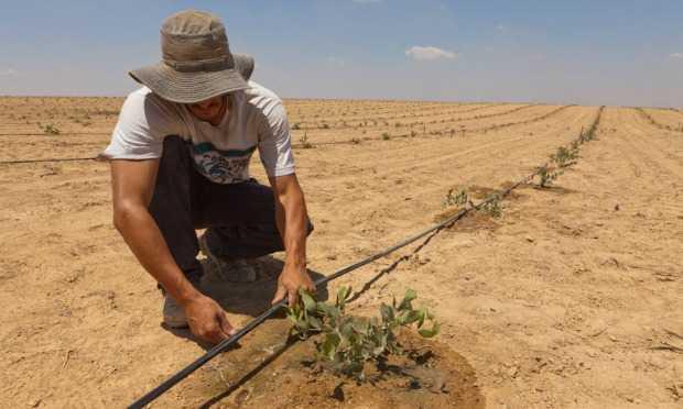 Người dân Isarel và công nghệ tưới nước nhỏ giọt nổi tiếng