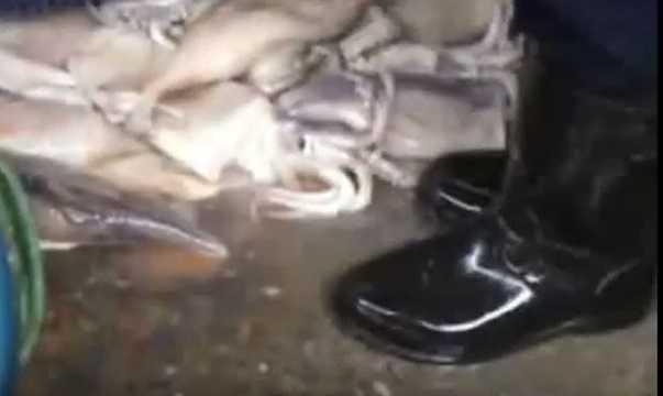 Sau khi rã đông, mực thối sẽ được rửa qua bằng nước lã. Người bán đổ hàng loạt mực ra sàn cực bẩn rồi bơm nước rửa đồng loạt.