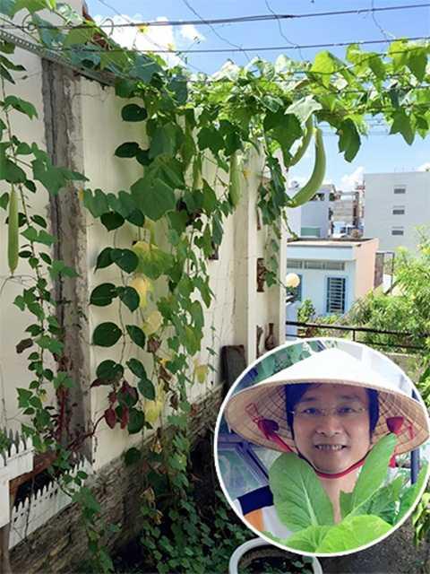 Vườn được bố trí giàn nhiều tầng, làm giàn để tăng diện tích trồng trọt