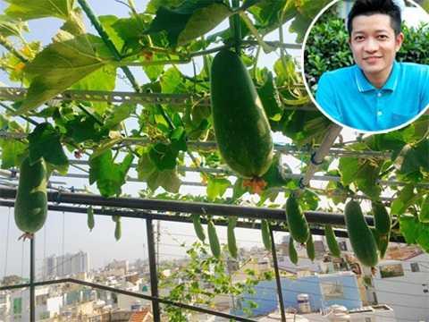 Thuận Việt mất nhiều công sức thử nghiệm trồng nhiều loại cây mọc giàn