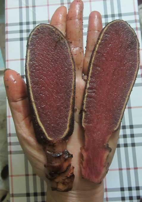 Có nhiều loại nấm ngọc cẩu, nhưng loại tốt nhất thì chỉ những thầy lang nhiều kinh nghiệm mới biết được