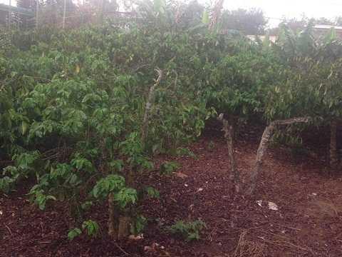 Cơn mưa nhỏ tại thị xã Buôn Hồ - Ảnh:Thanh Hải