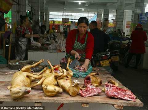 Tờ Daily Mail (Anh) vừa đăng tải những hình ảnh về hoạt động kinh doanh tại chợ thịt chó Ngọc Lâm (Trung Quốc).