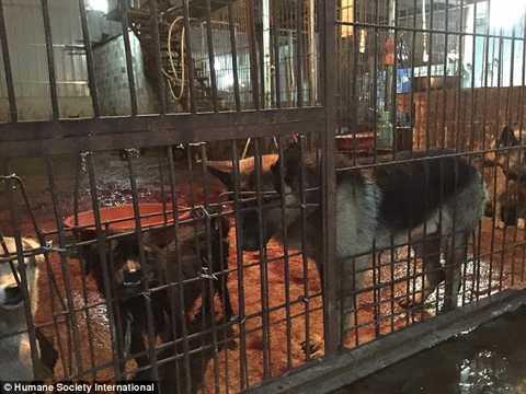 Có thể thấy những con vật bị nhốt trong chuồng bẩn thỉu.