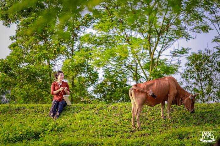 Cảnh tượng chăn bò được nữ sinh thể hiện ngay trong bức ảnh ky yếu.