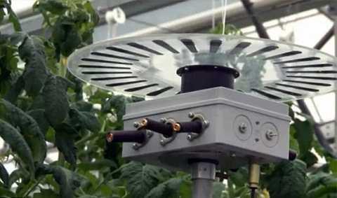 Một nhóm nghiên cứu khác đang khám phá tính năng nông nghiệp của đèn LED. Ảnh Dailymail