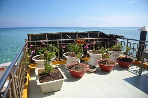 Ở bất cứ đâu, đảo chìm hay đảo nổi, đảo lớn hay bé,   nhà giàn đều hiện hữu màu xanh của những vườn rau thanh niên, những chậu   cây cảnh nở hoa.