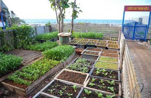 Trong vườn rau thanh niên đề dễ dàng bắt gặp rau cải, rau muống, rau mùng tơi, cây ớt… xanh tốt.
