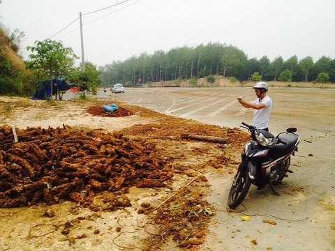 Hình ảnh cây Cu Li bỏ tại tuyến đường-Ảnh :TH