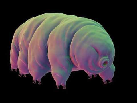 Loài gấu nước tám chân chỉ ưa sống ở những nơi ẩm thấp. Ảnh Metro