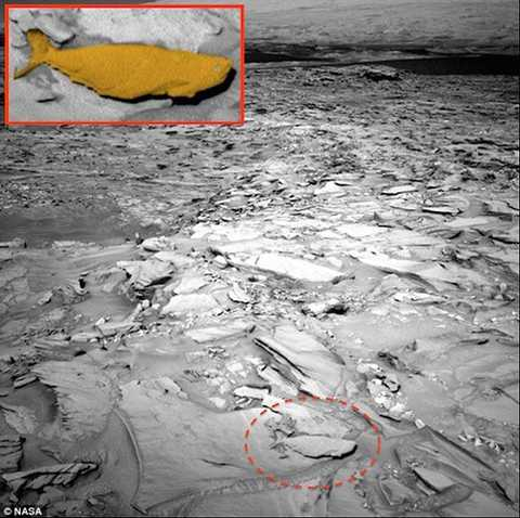 Tàu Curiosity Rover của NASA vừa cung cấp   những hình ảnh trắng đen mới nhất về một hóa thạch hình cá tìm thấy   trên bề mặt sao Hỏa. Nguồn ảnh: Dailymail.