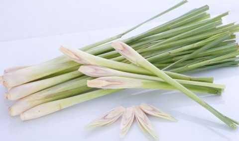Chất dầu sả là chìa khóa cấu thành đã   tạo mùi thơm chanh và mùi vị dược thảo như cây sả (Cymbopogon ctratus),   melissa (melissa officinalis) and verbena (Verbena officinalis).