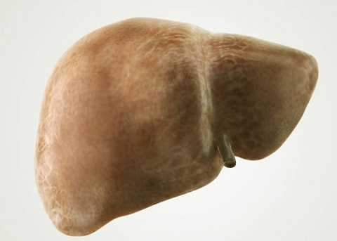 Lá gan bị nhiễm mỡ và xơ hóa