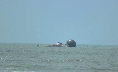Trưa 27/5, xác cá voi mắc cạn cách bờ chừng nửa hải lý