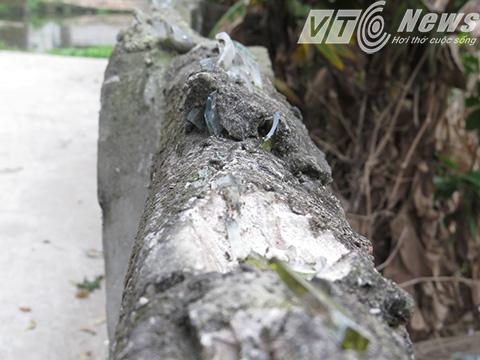 Bờ tường cắm mảnh chai nơi ông Khá trèo qua bị thương - Ảnh MK