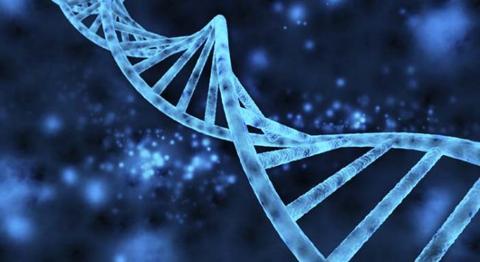 Khi các nhà khoa học cố định lại, các đoạn mã DNA ngoại lai này giữ nguyên tình trạng, không hề thay đổi. (Theo Viral Nova)