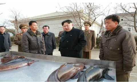 Nhà lãnh đạo Triều Tiên thăm trại cá da trơn Samchong hôm 6/12 năm ngoái. Ảnh: KCNA
