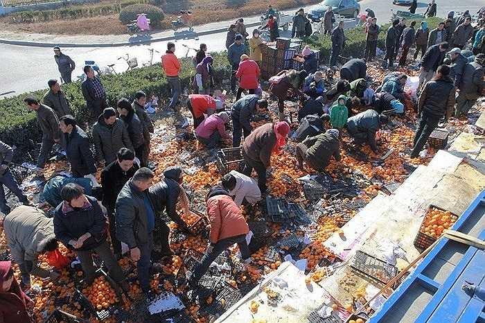 Hôm 28/11/2013, người dân ở thành phố Đường Sơn, tỉnh Hà Bắc, Trung Quốc ào ra hôi của khi một chiếc xe chở quýt bị lật