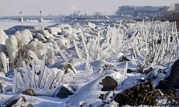 Cây cỏ đóng băng ở Ohio