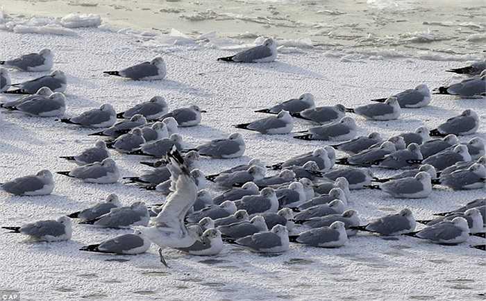 Những chú chim nằm phơi nắng bên bờ sông ở bang Pennsylvania, Mỹ