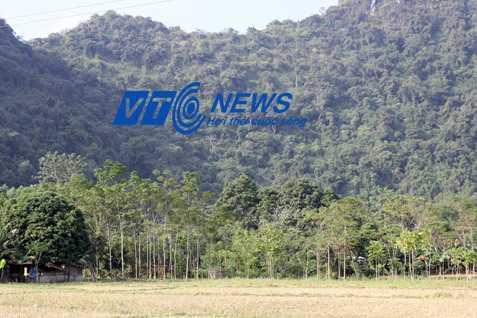 Rừng ở xã Thành Yên tràn ngập khắp nơi
